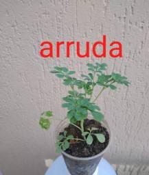 Horta em sua casa mudas de temperos e hortaliças whats 9686-45-03