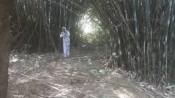 Bambu manteiga pra pipa fibras papagaio