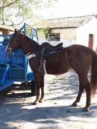Cavalo de esteira puro