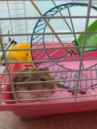Gaiola com hamster