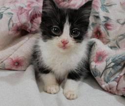 Doação de gatinha * LEIAM A DESCRIÇÃO *