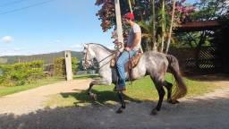 Cavalo Marchador Garanhão Mangalarga