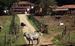 60- sítio a venda em São Sebastião Do Passe
