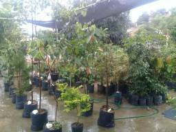 Plantas frutíferas , Palmeiras, terras