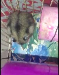 Hamster para reserva