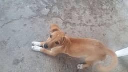 Estou doando está linda cachorrinha mistura com pinche
