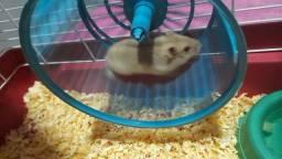 Hamster (tudo por 100)