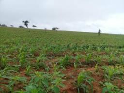 32 tarefas em Biritinga Bahia há 3km da pista