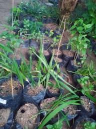 Plantas Medicinais (Menor Preço)