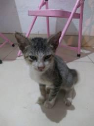 Gato para a adoção