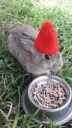3 mini coelhos