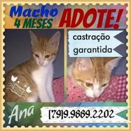 Adote Gatinho, Macho, 4 meses