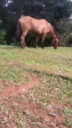Vendo(cavalo, gansos e porcos)
