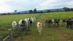 Fazenda 324 hectares, plana e cultura
