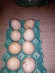 Ovos de Brahma cinza