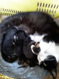 Doação Família de gatos