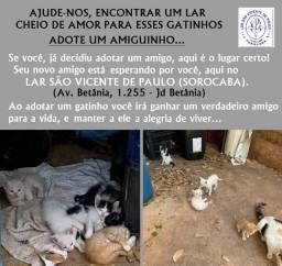 Doação de Gatos (Lar São Vicente de Paulo-Sorocaba)