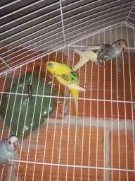 Três quartos filhotes