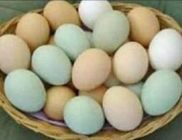 Ovos galados e galinha caipira !