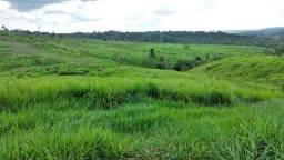 Fazenda  apui Amazonas