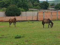 Vendo cavalo e potranca