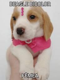 Fofurinha de Beagle confira
