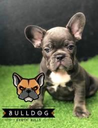 Bulldog frances blue sólido