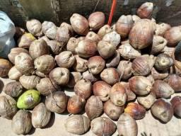 Cocos novos secos
