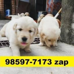 Canil Filhotes Premium Cães BH Golden Pastor Akita Rottweiler Labrador Dálmatas