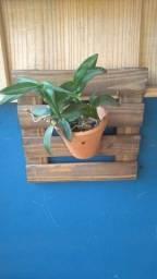 Título do anúncio: deck para vaso em pinus (par)
