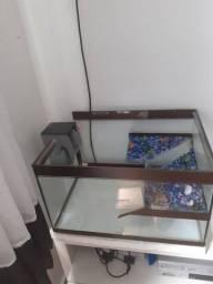 Aquaterrario 50cm  x 30cm x 38cm