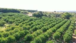 Fazenda de Laranja 112 hectares