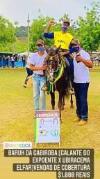 Cobertura, Garanhão MM , Campeão