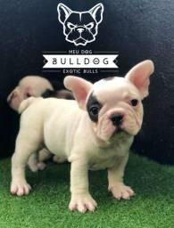 Bulldog frances pirata macho