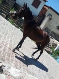 Égua toda boa e bonita