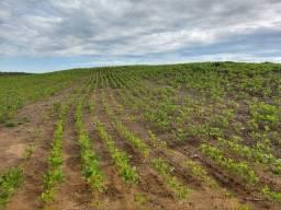 .  Fazenda 150 Alqueires em Porto nacional Tocantins