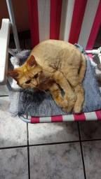 Doação de Gato Amarelo