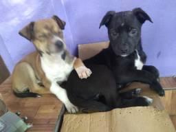 Cachorros porte médio pra adoção,PRA QUEM REALMENTE FOR CUIDAR