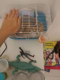 Gaiola e hamster anão russo