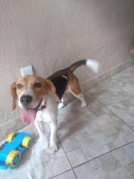 Vendo um beagle 13 polegadas