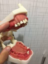 Manequim Endodontia DentArt