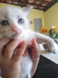 Doações de gatinhos fêmeas