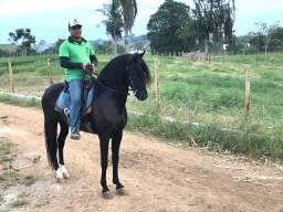 Cavalo Mangalarga Machador Preto