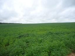Título do anúncio: 1400 Hectares, 695 hectares de lavoura Brasnorte-MT