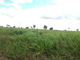 Fazenda Espetacular de Pecuária à Venda - 21000 ha em Araguaiana / Mato Grosso