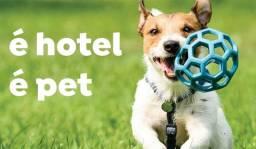 Serviço de Hospedagem e Pet Sitter