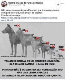 Pinscher!!!