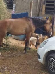 Cavalo ? muito lindo
