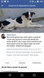 Cachorro Doação
