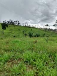 Fazenda com 550 hectares em Alto Alegre/RR, ler descrição do anuncio